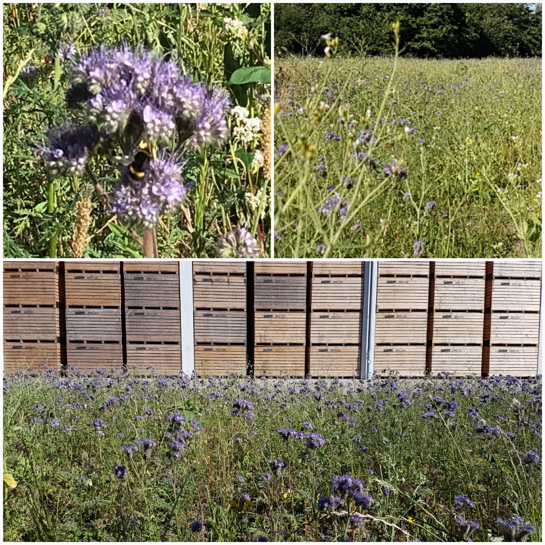 Bienenweide_Collage_Teil_3.jpg