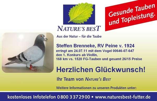 Taube_Steffen_Brenneke.JPG