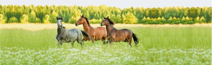 RM/Pferde2.jpg