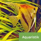 aquaristik.jpg