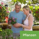 garten_button_pflanzen.jpg