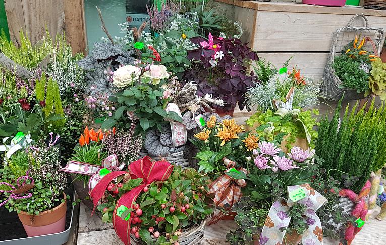 GartencenterAttendorn/Herbst2.jpg