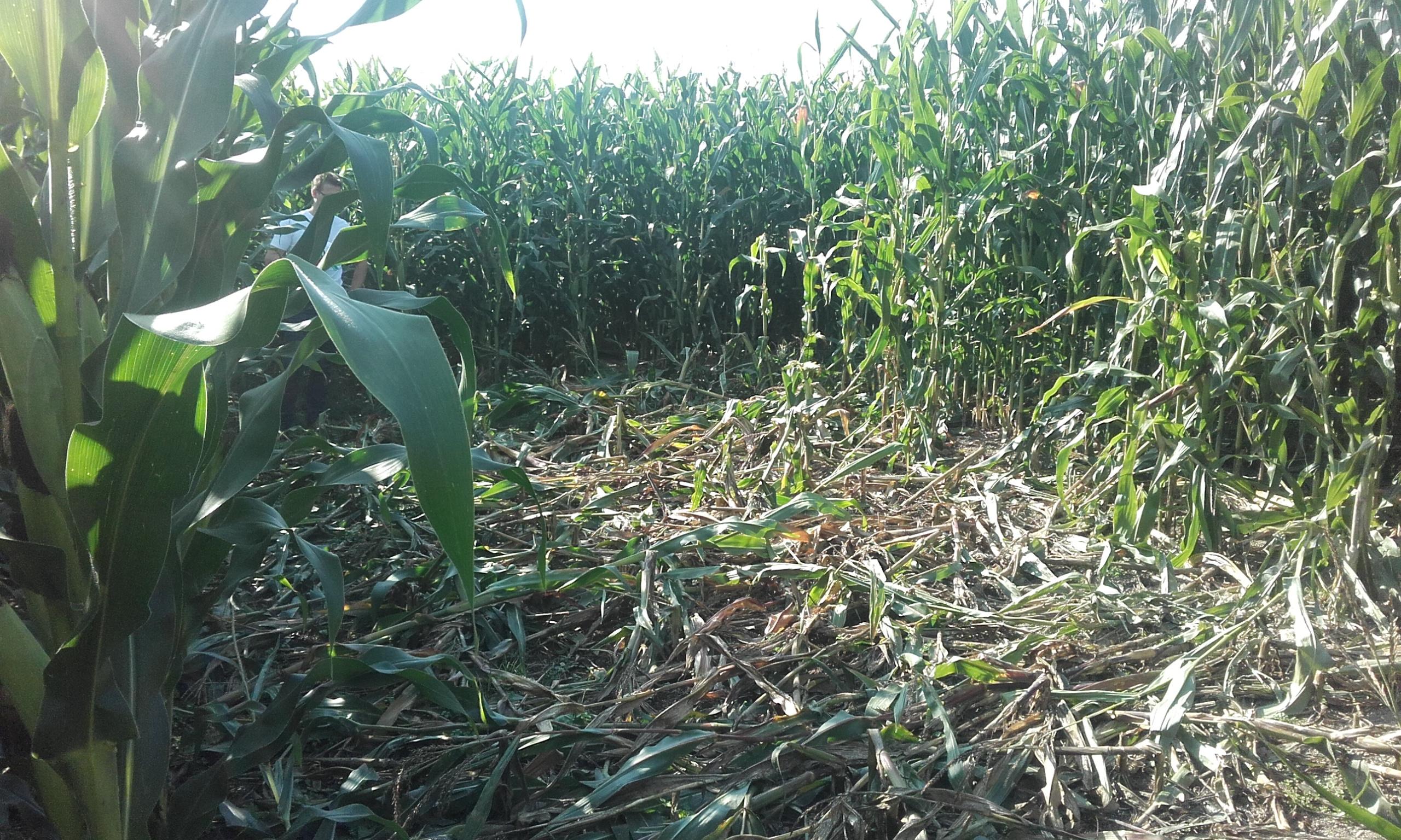 Landwirtschaft/landw2.jpg